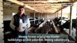 Пскентлик фермер: Ерим кластер ташкилотига қўшиб юборилган¸ менинг эса хабарим йўқ