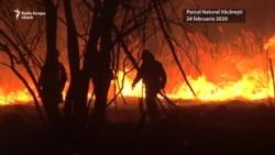 Incendiu în Delta Văcărești