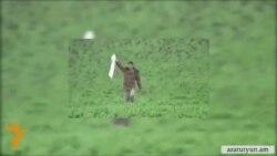 Հայ զինծառայողի «առևանգման հավանականությունը գրեթե զրոյական է», բայց քննարկվում է