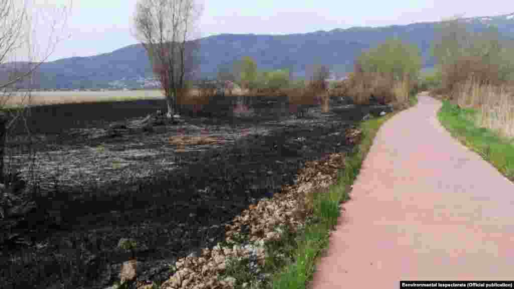 Междувременно хората подозират, че този голям пожар, тръгнал от тръстиката в края на април, е бил запален умишлено, за да освободи пътя за бъдещ незаконен строителен обект на македонската брегова линия.