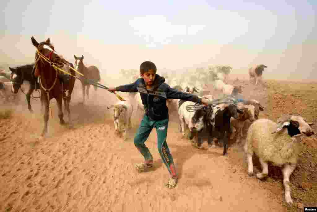 Dečak vodi svoje životinje na sigurno nakon napuštanja sela Abu Jarboa