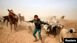 Mosul: Beg od rata