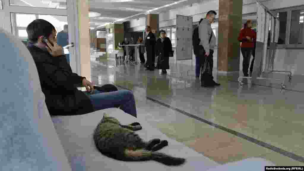 A cat naps as voters review their choices at a polling station in Luhansk.
