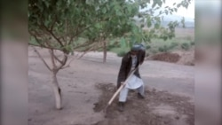 Афганский садовник возделывает свою мечту