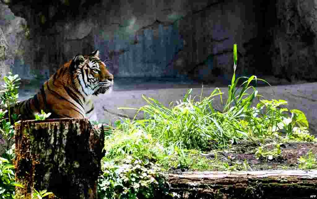 В этот день зоопарки всего мира готовят игры, квесты, конкурсы и увлекательные мастер-классы для своих посетителей