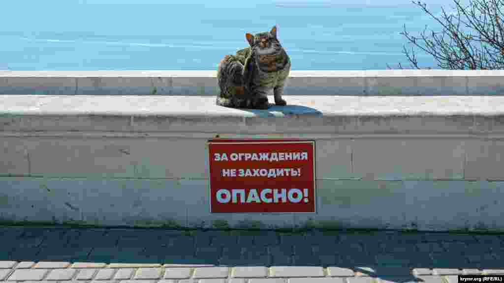 Местный кот чешет лапой ухо и не нарушает правила безопасности, установленные предупреждающей табличкой