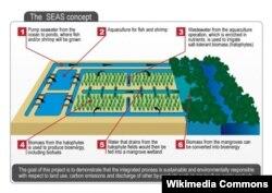 SEAS консорциумунун саликорния өстүрүү концепциясы.