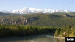 Алтайский край, тайга. Иллюстративное фото.