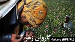 Fotografie dintr-o campanie antidrog, Afganistan, 3 iunie 2017