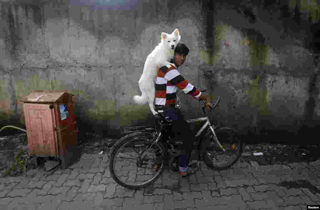 A man rides a bicycle as he carries his dog on his shoulders in Mumbai, India. (Reuters/Danish Siddiqui)