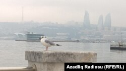 Баку (иллюстрация)