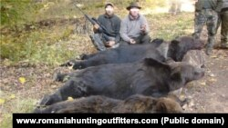 Bear hunting in Romania