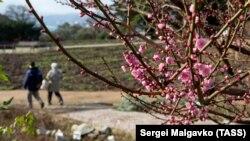 Krımda Botanika Bağı