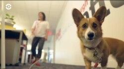 В США все больше компаний разрешают приходить на работу с собакой