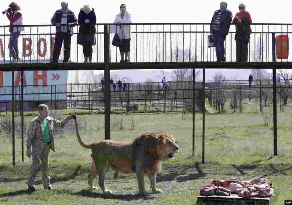 People look at lions in the Taigan safari park in the Crimean town of Bilohirsk on April 11, as the facility reopens after the winter season. (AFP/Max Vetrov)