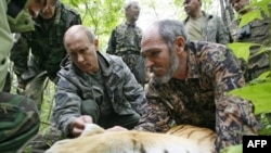 Vladimir Putin (left) tagging the tiger