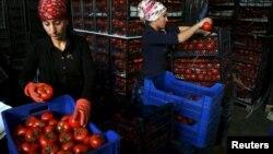 Женщины укладывают помидоры в ящики на рынке в Анталии. Иллюстративное фото.
