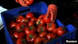 Недоступные теперь россиянам турецкие помидоры