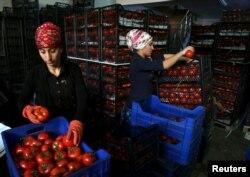 Недоступні тепер росіянам турецькі помідори