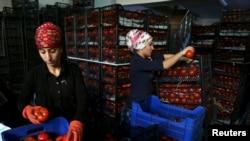 Работницы расфасовывают томаты на оптовом рынке в Анталье после введенного Россией запрета на ввоз некоторых товаров из Турции. 30 ноября 2015 года.