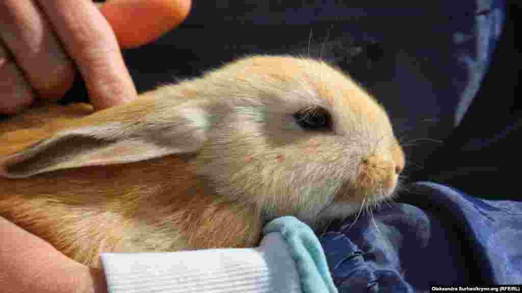 Кроликов можно брать на руки и гладить