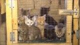 Жизнь бездомных кошек и собак