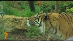Мешканці лондонського зоопарку пройшли щорічну процедуру зважування