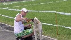 Породистые чемпионы и бездомные псы