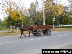 Зэка на возе ў Івацэвічах можна сустрэць проста ў горадзе