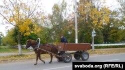 Конь, які працуе ў Івацэвіцкай калёніі. Ілюстрацыйнае фота