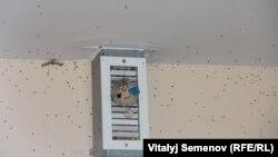 В некоторых квартирах живут только мухи
