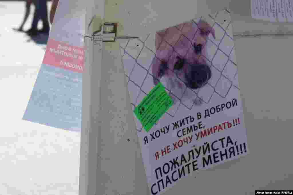 """Мэр Бишкека на прямой линии с читателями """"Азаттыка"""" сказал, что столичные власти намерены построить приют для бездомных животных"""