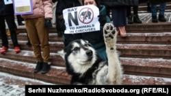 Фоторепортаж: Кияни протестували щодо участі тварин у циркових шоу
