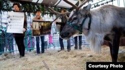 """Активисты """"Альянса в защиту животных"""" в клетке оленя Рудольфа. Снимки Филиппа Киреева"""