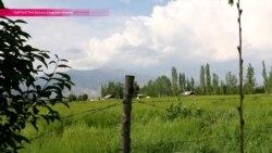 Граница на замке: как фермер-пенсионер заменил пограничников