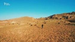 Разоренные пастбища, увеличение поголовья скота...