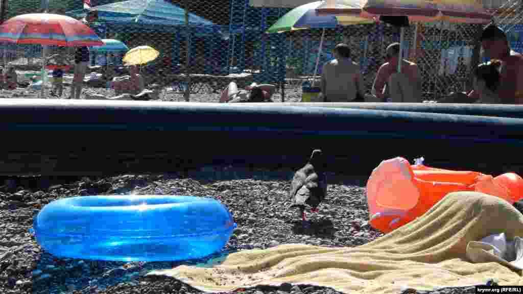 Сіткою огороджений пляж, на якому заборонено купатися, але людям це абсолютно не заважає