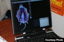 Компьютерная программа для изучения анатомии животных