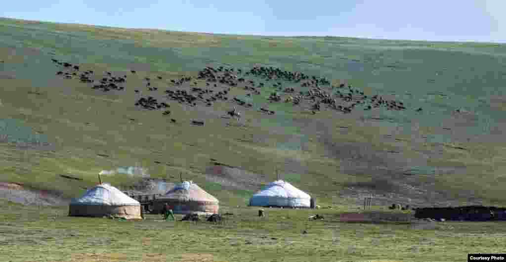 Жайлаудағы шопан үйі. Баян-Өлгий аймағы, Моңғолия, 2014 жыл.
