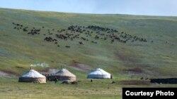 Казахские юрты на летнем пастбище. Фото Баяра Балганцэрэна.