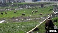 «Bu gün Azərbaycanın ekologiyasına ən böyük ziyanı köçəri maldarlıq vurur»