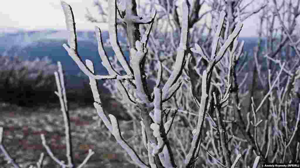 Заиндевевший кизил на Субаткан-яйле