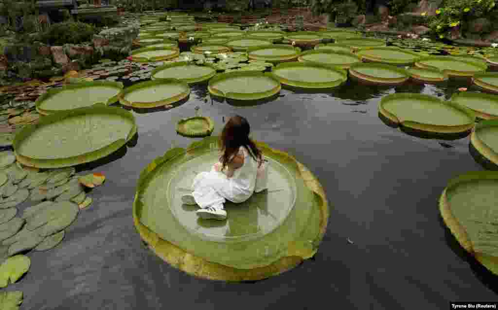 A girl poses for a photo on a giant waterlily leaf in Taipei, Taiwan.  (Reuters/Tyrone Siu)