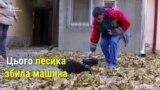В Одесі запрацювала перша в Україні швидка допомога для безпритульних тварин (відео)