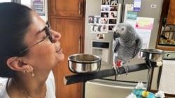 Papagalli ka një mesazh për koronavirusin