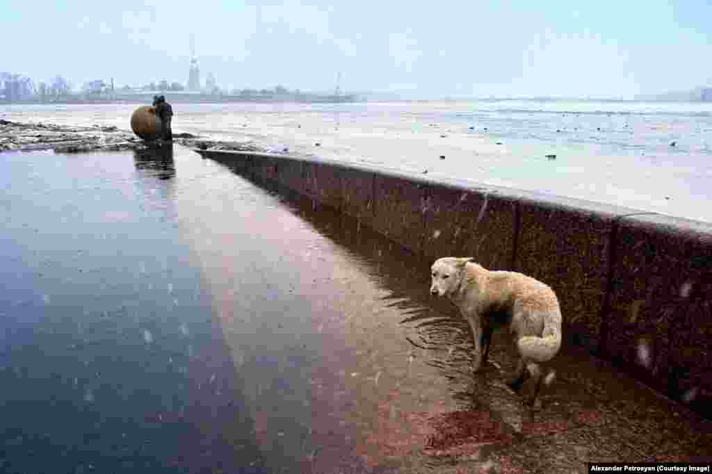 "A street dog wading through floodwater next to the frozen River Neva. Petrosyan remembers her arriving ""just for a moment"" before disappearing as the sleet grew more heavy."
