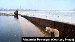 """A street dog wading through floodwater next to the frozen River Neva. Petrosyan remembers her arriving """"just for a moment"""" before disappearing as the sleet grew more heavy."""