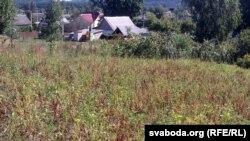 Бульбяное поле Мігурскага