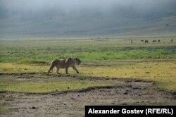 В кратере Нгоронгоро, в поисках носорогов