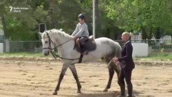 Calul de leac